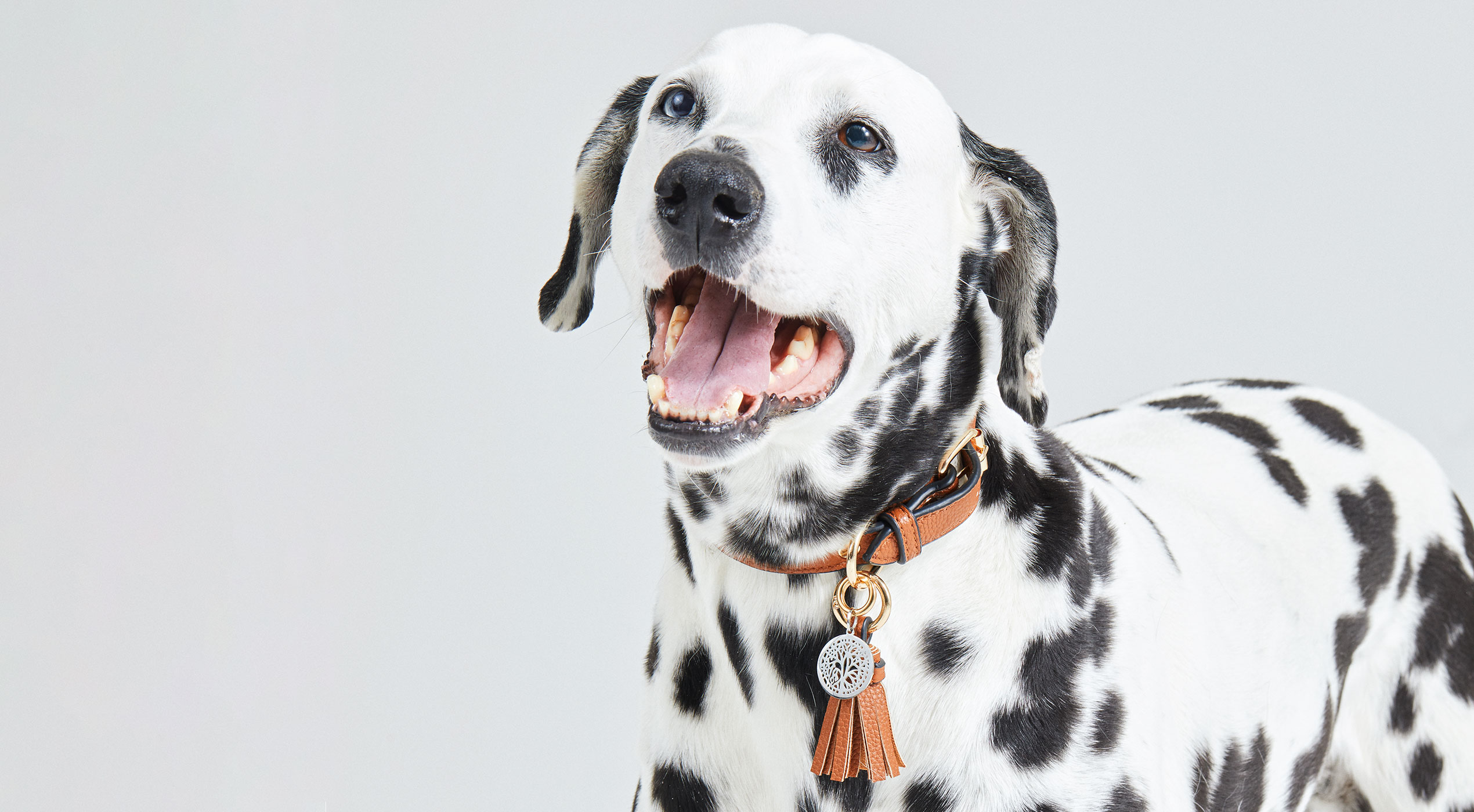 Haus Berlinger Haustiere Halsbänder Trends